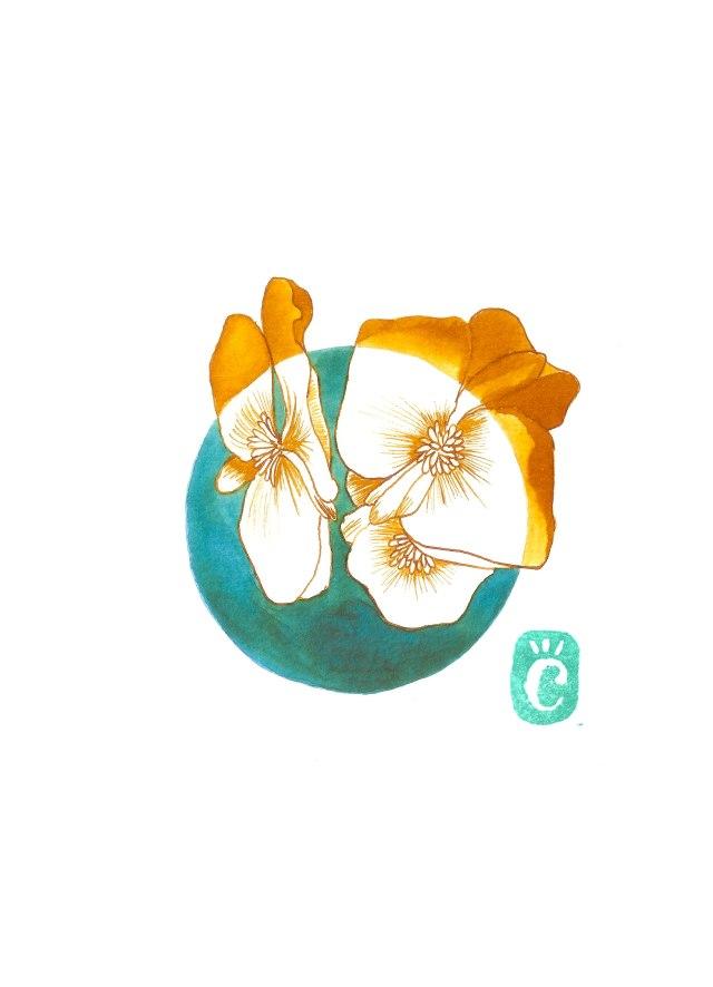 14-begonia.jpg